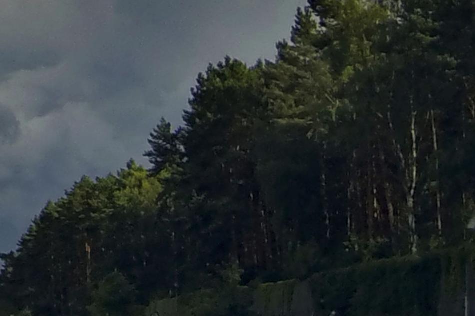 Ein Baum ist bei dem Unwetter in Mecklenburg Vorpommern auf ein Zelt gekracht (Symbolbild).