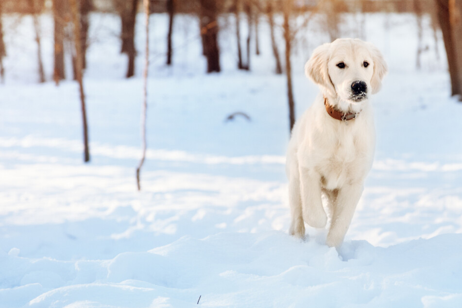 haustierratgeber: Hund entlaufen, Katze verschwunden? Das müssen Tierbesitzer tun