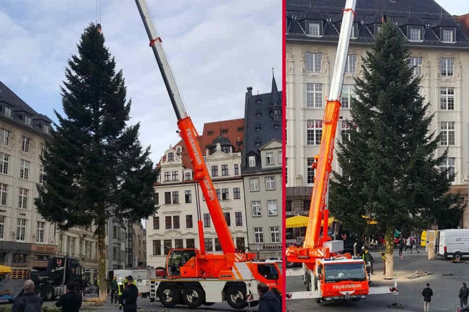 Nach all den Fichten endlich eine Tanne! Nachdem der Weihnachtsbaum dekoriert wurde, bleibt er bis zum 2. Januar 2019 auf dem Leipziger Marktplatz stehen, bevor er als Nutzholz der holzverarbeitenden Wirtschaft zugeführt wird.