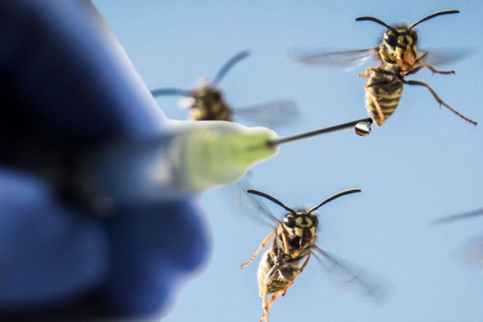 Viele Apotheker beklagen Engpässe bei den Autoinjektionen gegen Wespenstiche. (Bildmontage)