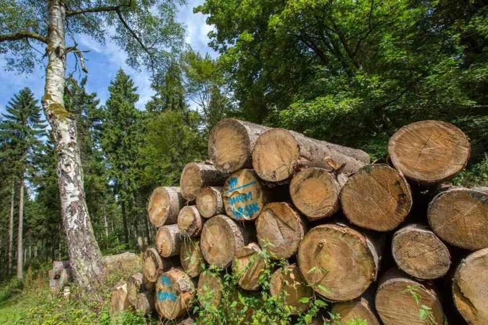 Immer weniger geschützte Waldflächen werden in Hessen gerodet. (Symbolbild)