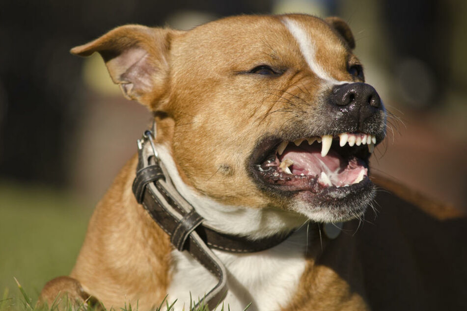 Unbekannte hetzen Hund auf Passanten! Polizist schwer verletzt