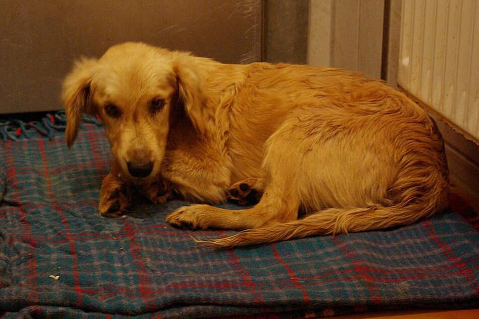 Der kleine ängstliche Hund wurde unter einer Parkbank dem Tod überlassen.
