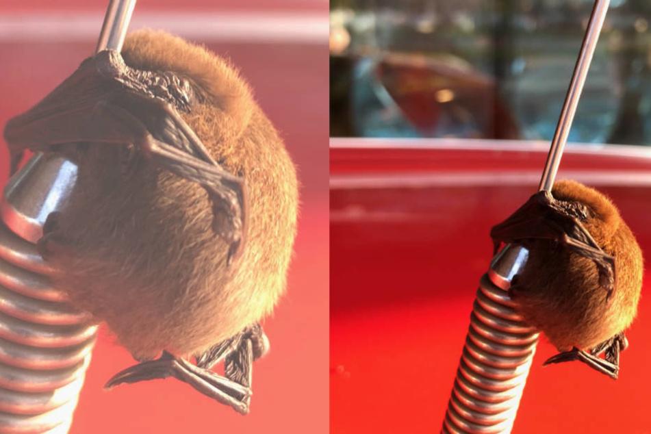 Was ist das denn?! Feuerwehrmann findet seltsames Fell-Knäuel an Antenne