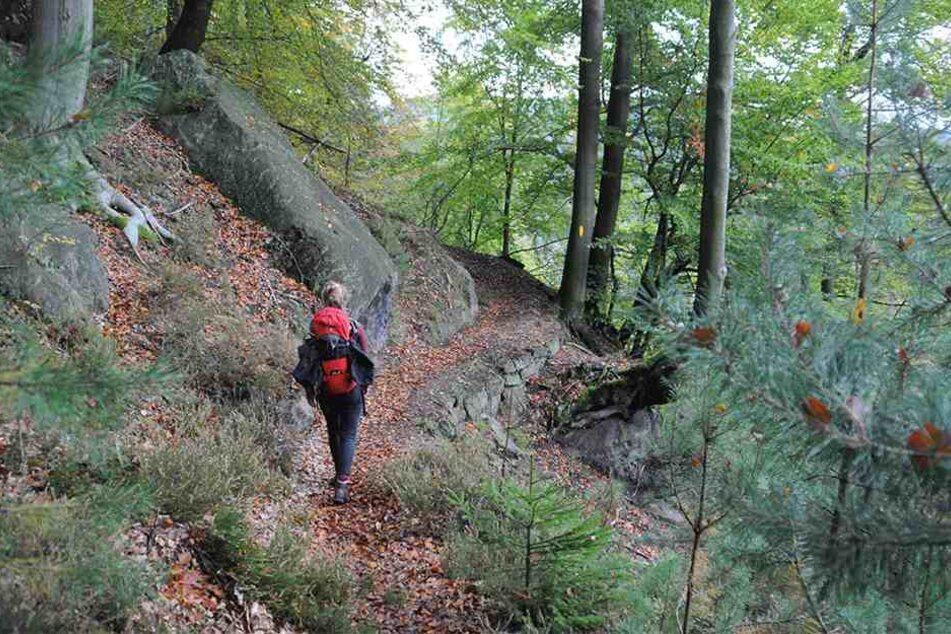 """Wandern auf dem """"Forststeig Elbsandstein""""."""