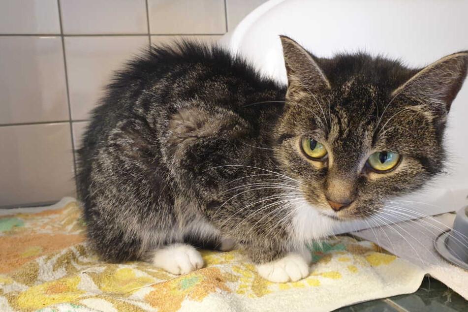 """Katzendame """"Paloma"""" überlebte in der Wohnung ihres toten Herrchens."""