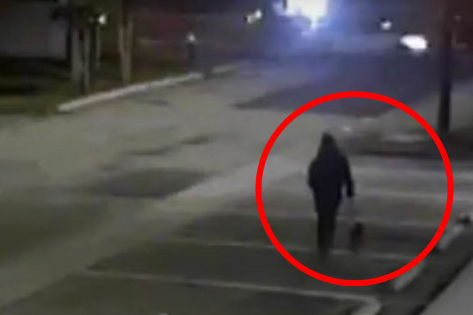 Ausgesetzter Hund irrt nachts umher, bis er ums Leben kommt