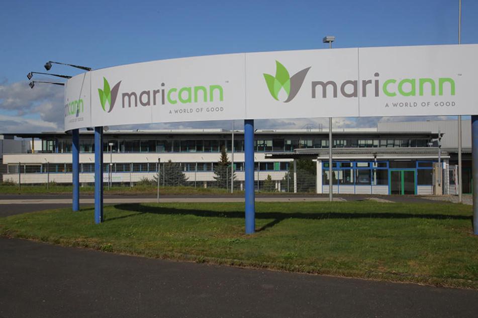 """Im Eingang des Werksgeländes ist """"maricann"""" schon mit seinem Firmenlogo  präsent."""