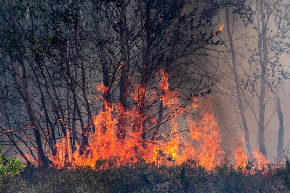 Waldbrände sind eine Erscheinung des Klimawandels.