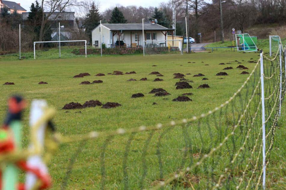 Nachdem der Sportplatz wieder in Schuss war, haben Maulwürfe den eigens aufgestellten Wildschutzzaun untergraben.