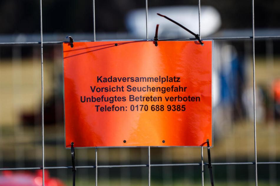 Für alle Fälle gerüstet: In Schirgiswalde-Kirschau wurde zur Probe ein Kadaversammelplatz eingerichtet.