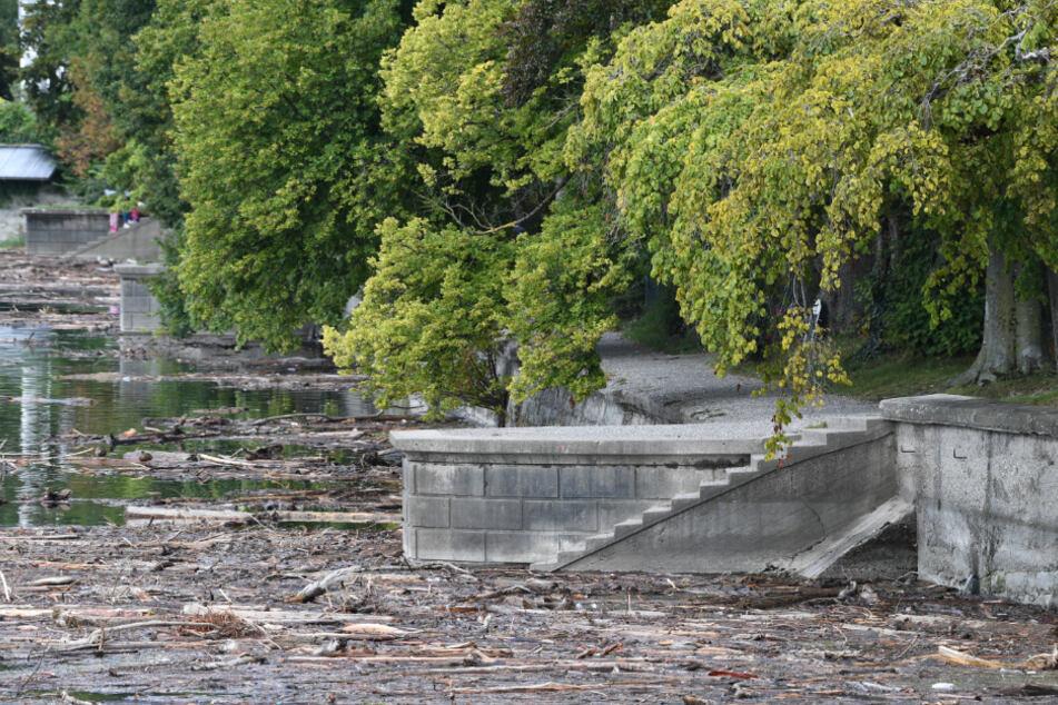 Das Holz soll aus den alpinen Regionen der Schweiz und Österreich angeschwemmt worden sein.