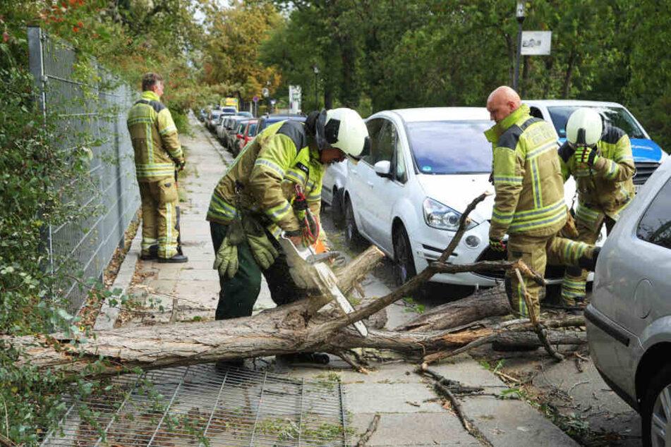 Die Übigauer Feuerwehr zersägt auf der Vorwerkstraße einen Baum, der auf einen weißen Ford stürzte und einen Zaun beschädigte.