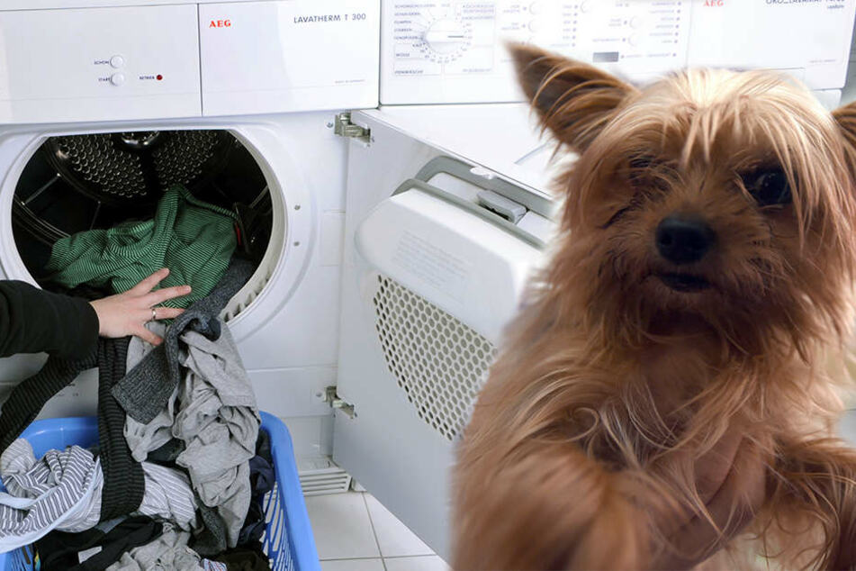 Nachbarschafts-Streit! Hund wird in Trockner zu Tode gequält