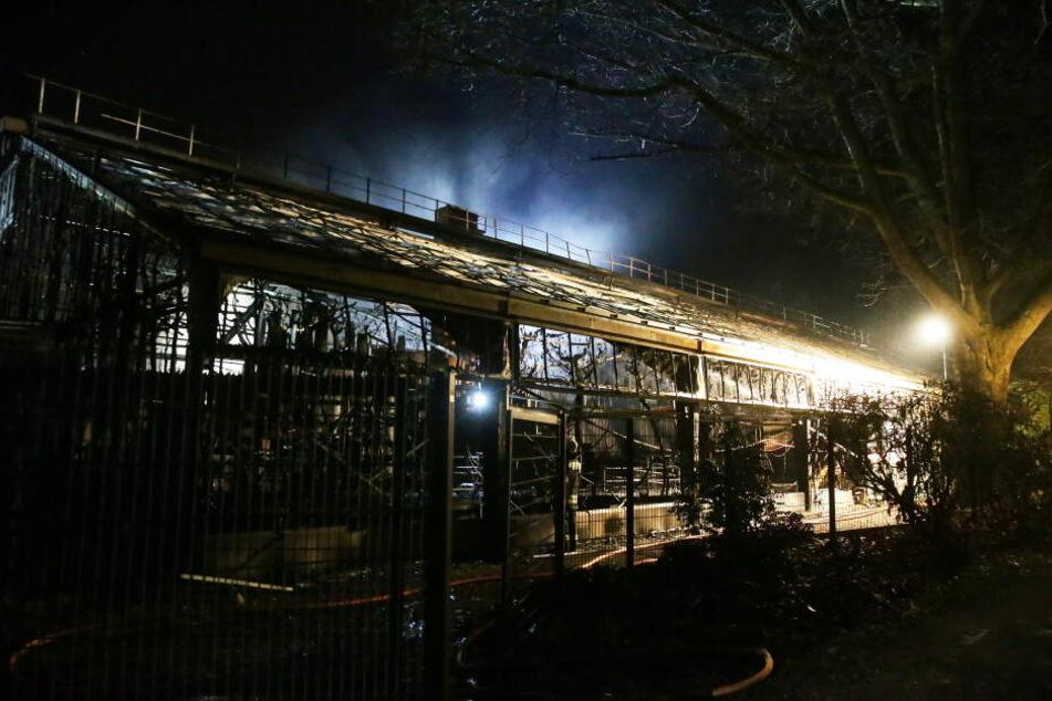 Das Affenhaus brannte bis auf die Grundmauern nieder.