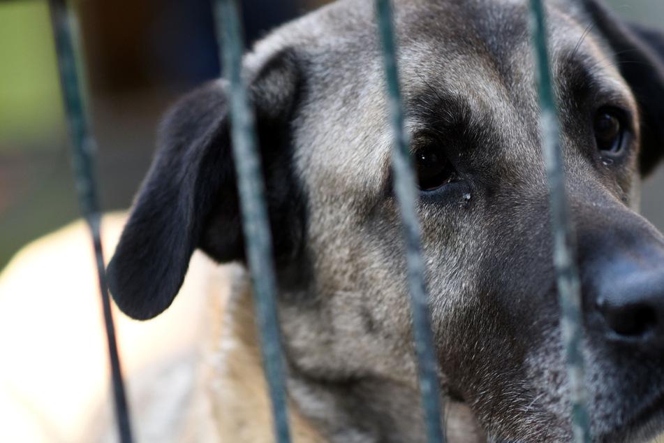 Tote Hunde und Katzen in Tierheim-Gefriertruhe gefunden