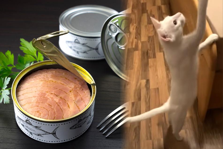 Katze wacht blitzschnell auf, weil ihr Herrchen einen besonderen Trick kennt