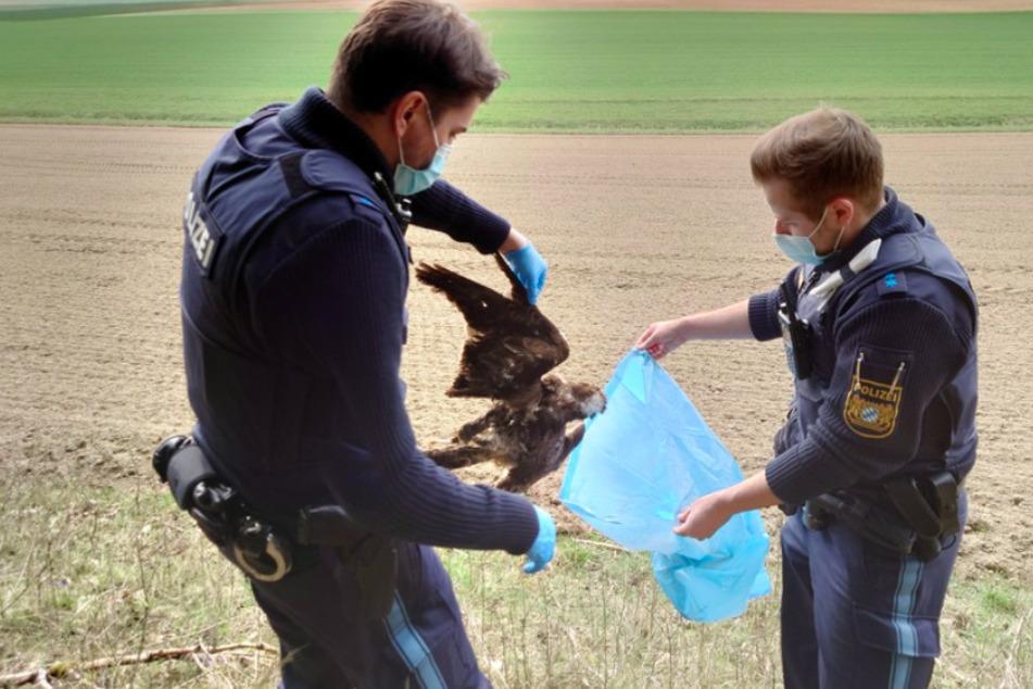Aufgehängte Falken und ermordete Biber: Ermittler sind Wilderern auf der Spur