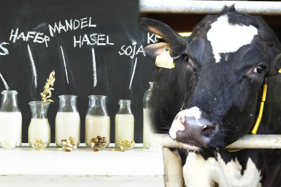 Die Milch macht's - auch ohne Kuh!