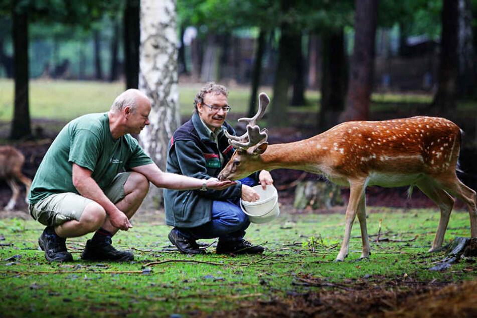Tierische Mitarbeiter bekommen ihr Gehalt in Naturalien