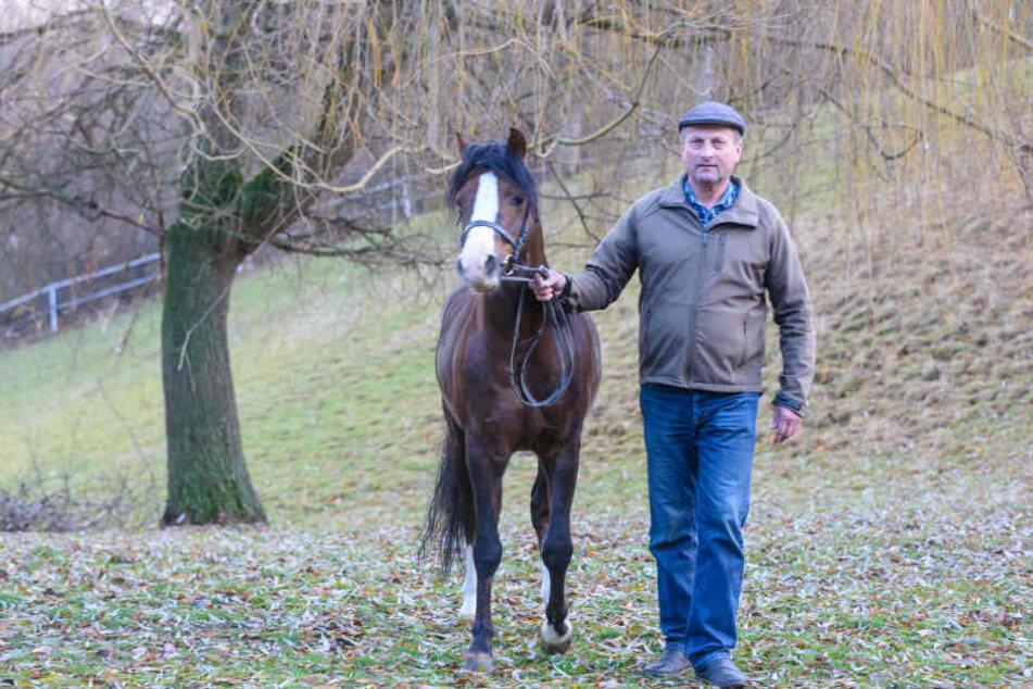 """Müllers früherer Lehrling, Freund und Zuchtpartner Siegfried Horn (60) am Dienstag nach dem Unfall mit Hengst """"Telynau"""" (6)."""