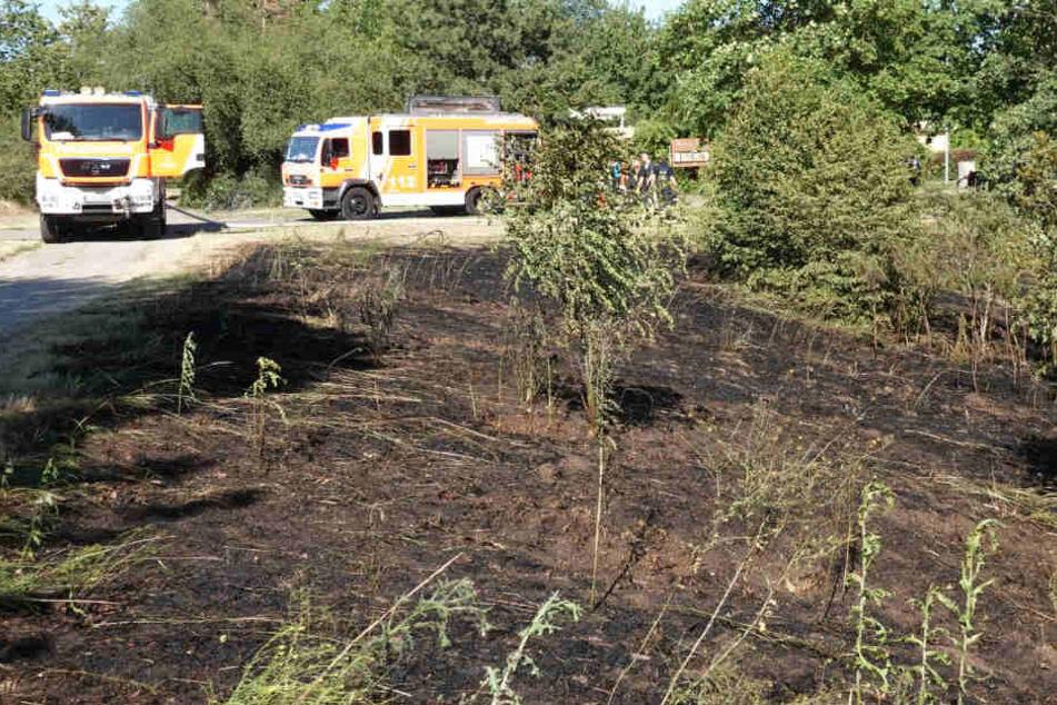 Leipzig: Verbrannte Erde! Feuerwehr löscht Flächenbrand am Kulkwitzer See