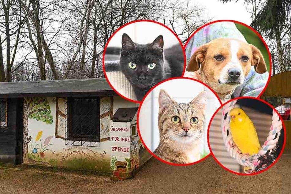 Tierfreunde aufgepasst: Pius, Lucy, Gipsy und Nadja suchen ein neues Zuhause!