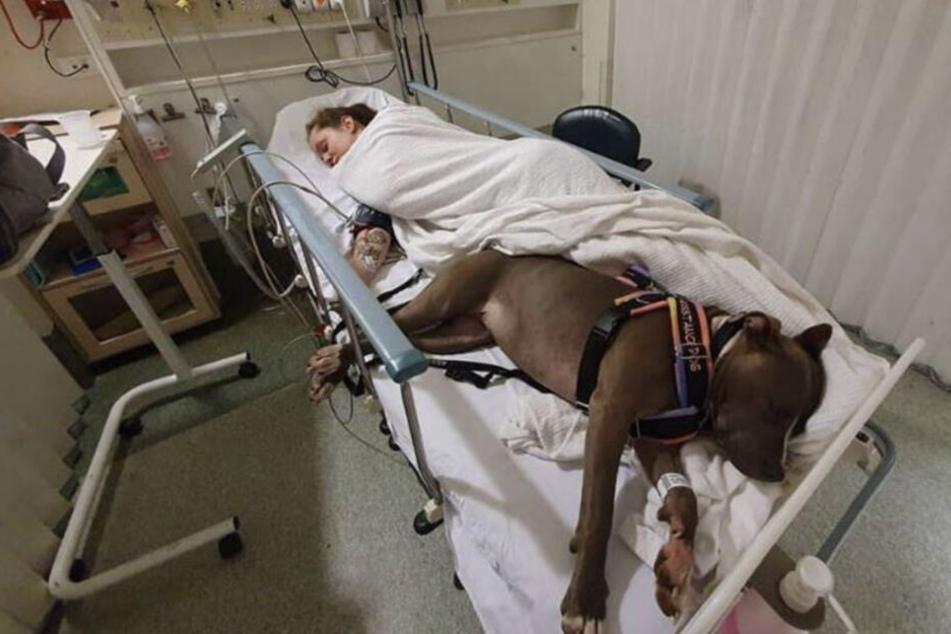 Dieser Hund spürte, dass gleich was Schlimmes passiert, das rettete Shaunas Leben