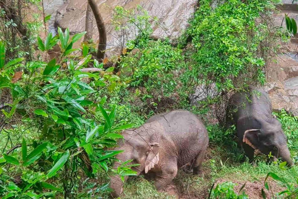 Tier-Drama! Sechs Elefanten stürzen Wasserfall herunter und ertrinken