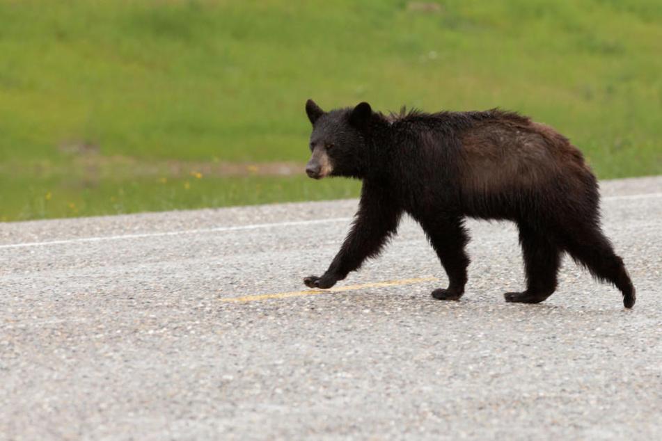 Auch zwei Kinder kamen bei dem Unfall mit einem Bären ums Leben. (Symbolbild)