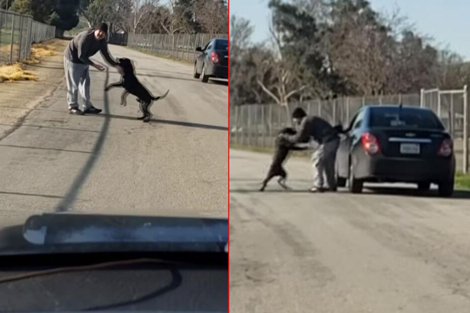 Immer wieder stößt der Mann seinen Hund von sich, um abzuhauen.