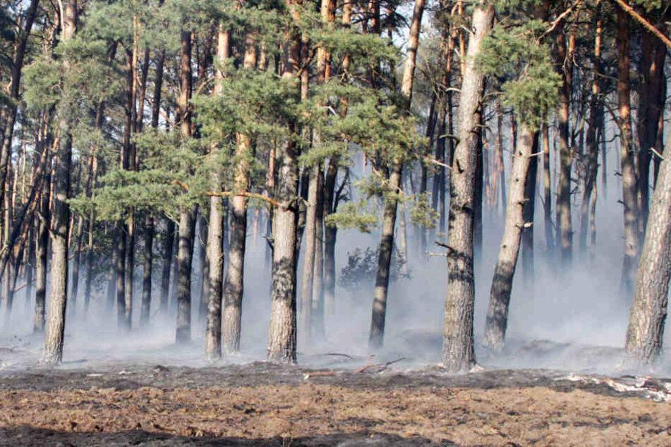 Mehrere Hektar Wald sind in bei Ludwigslust in Brand geraten.