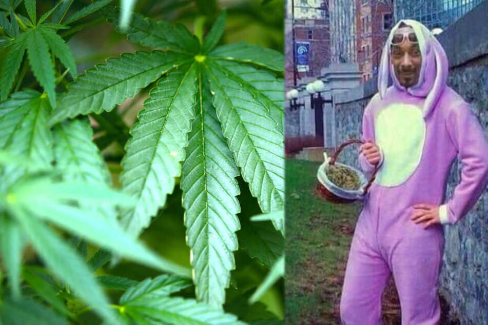 """Happy """"420""""? Steigender Cannabis-Konsum alarmiert Behörden und Mediziner"""