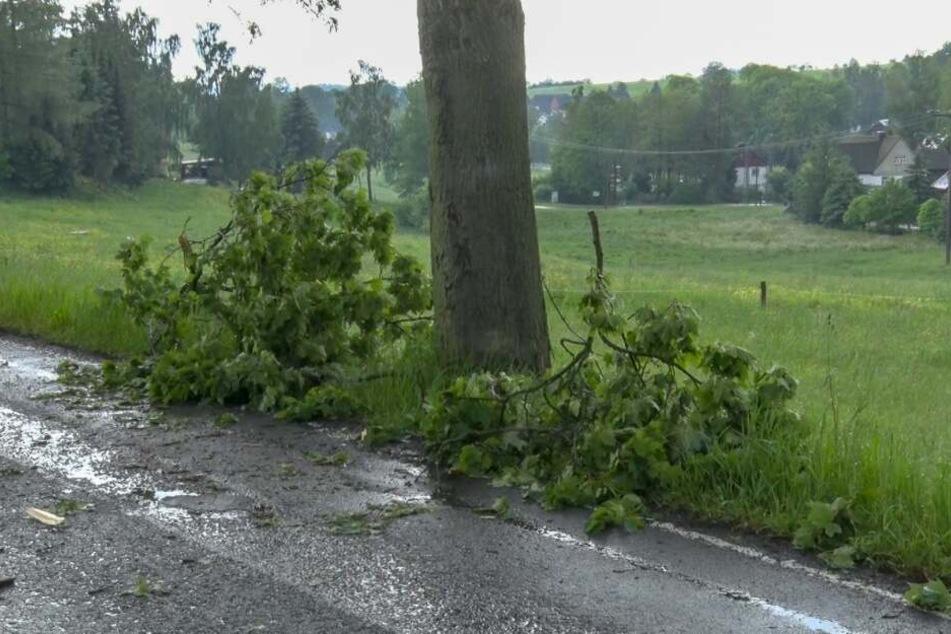 Wegen der heftigen Unwetter knickten an einigen Bäumen Äste ab.