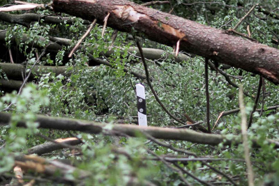 Die Schäden im Thüringer Forst, welche das Sturmtief Ende Oktober anrichtete, hielten sich ersten Angaben zufolge in Grenzen.