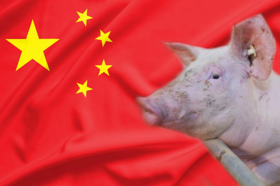 Der Deutsche Bauernverband sorgt sich um einen möglichen chinesischen Einfuhrstopp für deutsches Schweinefleisch, nachdem bereits am Donnerstag Südkorea ein Importverbot verhängt hat. (Symbolfoto)