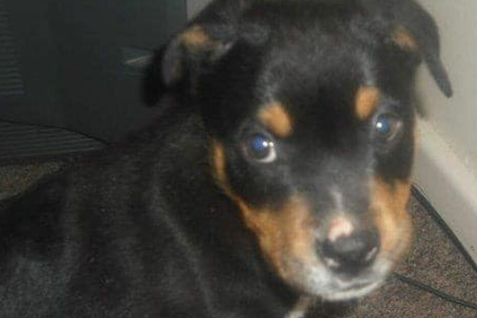 Hund von Kindern und Teenies zu Tode gesteinigt
