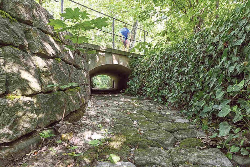 Eigentlich fließt hier der Kaitzbach im Großen Garten.