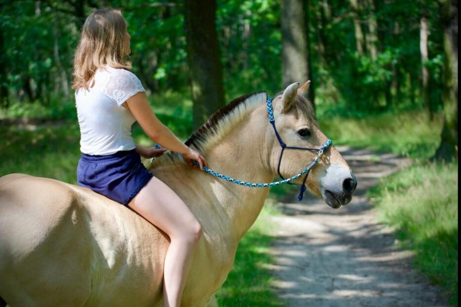 """Anett Breiting (25) sucht verzweifelt nach ihrem Fjordpferd """"Domino""""."""