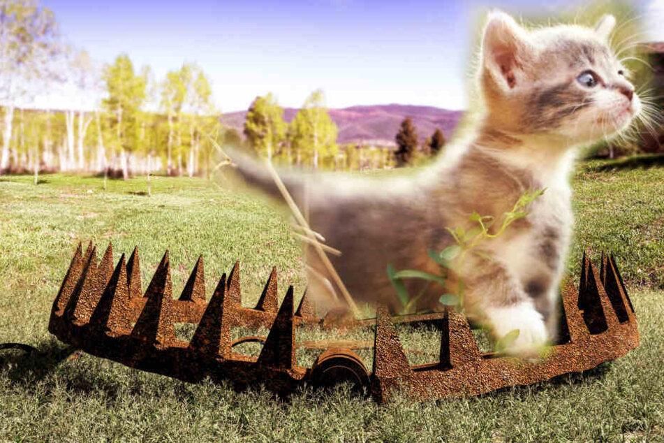 Katze läuft in illegale Jagd-Falle, jetzt muss ihr ein Bein amputiert werden!