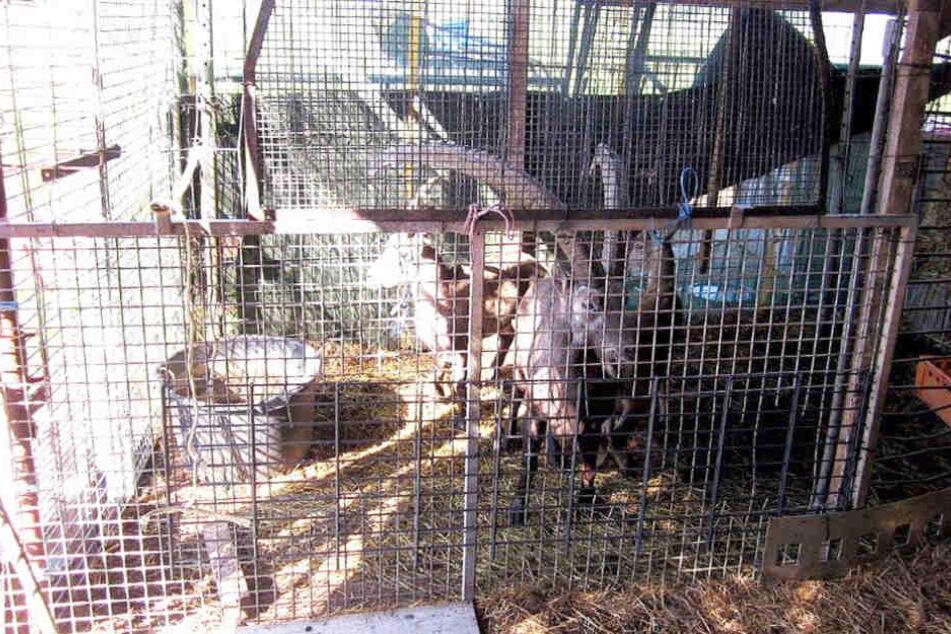 Die Tiere wurden seit dem Verkauf nicht mehr gesehen.