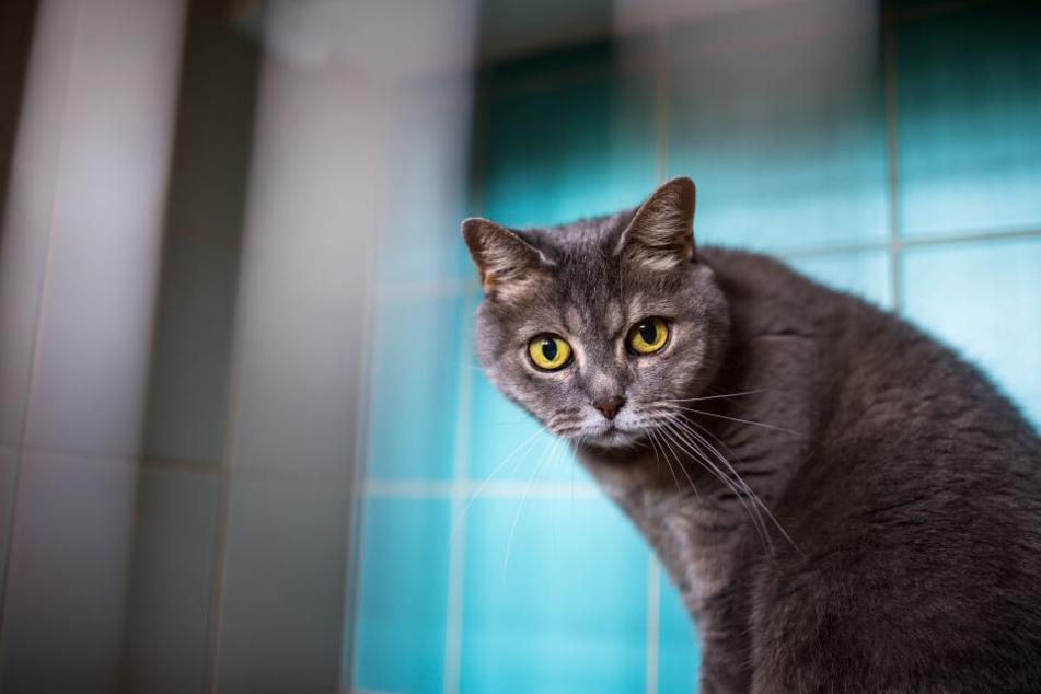 Krallen ausgefahren: Eine Katze kandidiert bei Kommunalwahlen