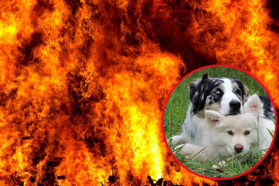 Für die beiden Hunde kam die Rettung zu spät. (Symbolbild)