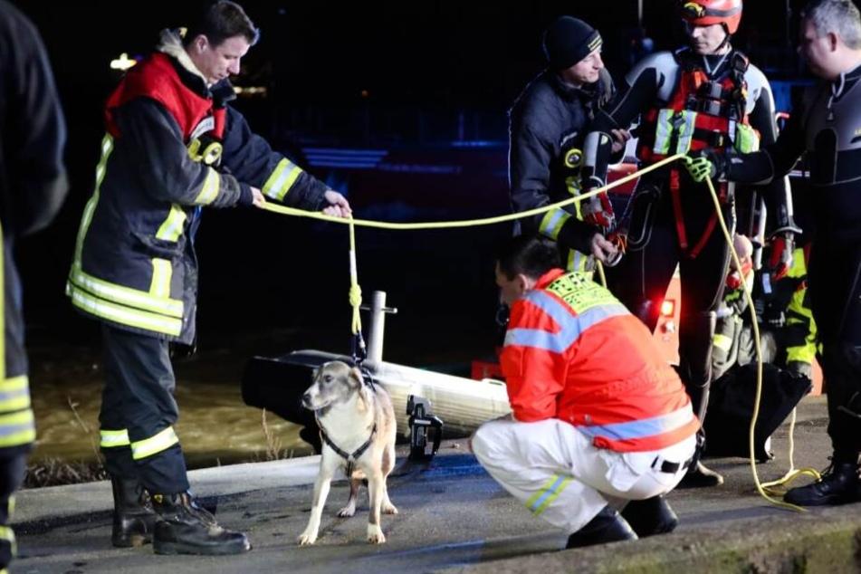 """Hund """"Bea"""" haut ab: Nur die Feuerwehr kann ihr helfen"""
