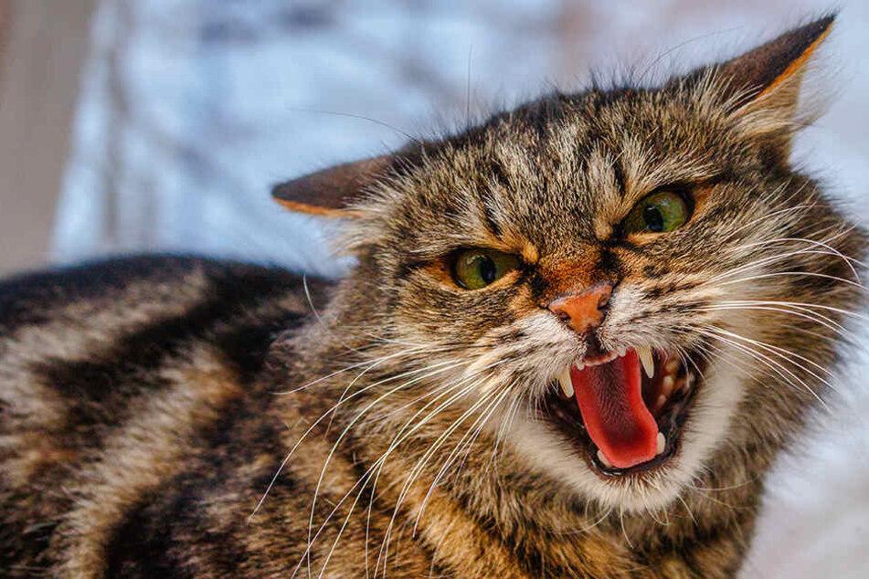 Möglicherweise fühlte sich die Katze von den beiden Streithennen belästigt. (Symbolbild)