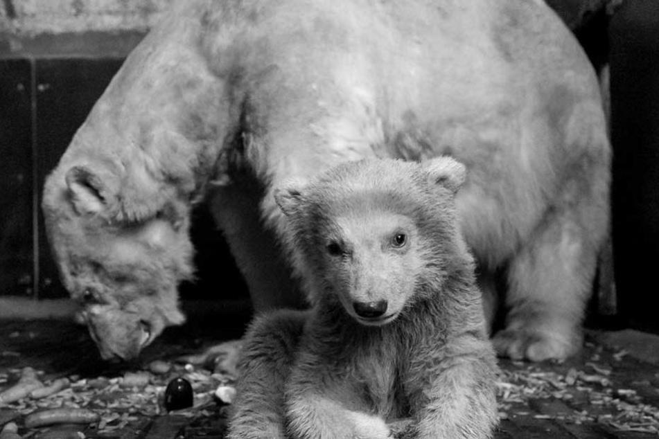 Das Eisbärenbaby Fritz war im Alter von vier Monaten überraschend gestorben.