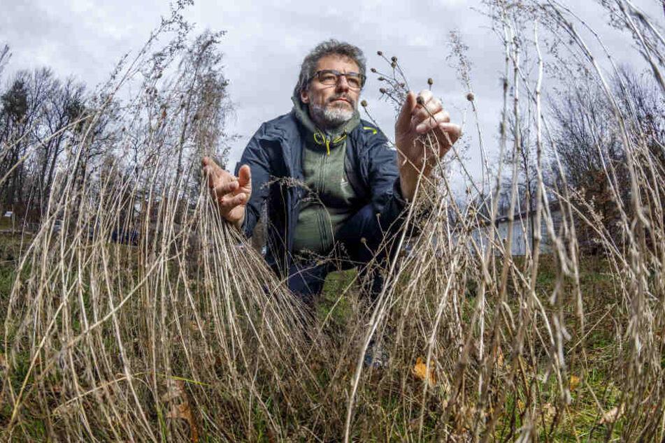 Weiß, wie wir die Insekten retten können: NABU-Fachmann Dr. Matthias Nuß (52) vom Senckenberg Museum für Tierkunde Dresden.