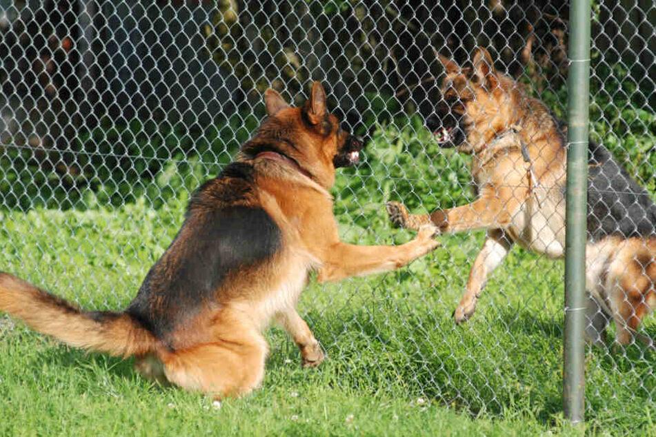Soldat soll Hunde füttern und wird von ihnen zu Tode zerfleischt