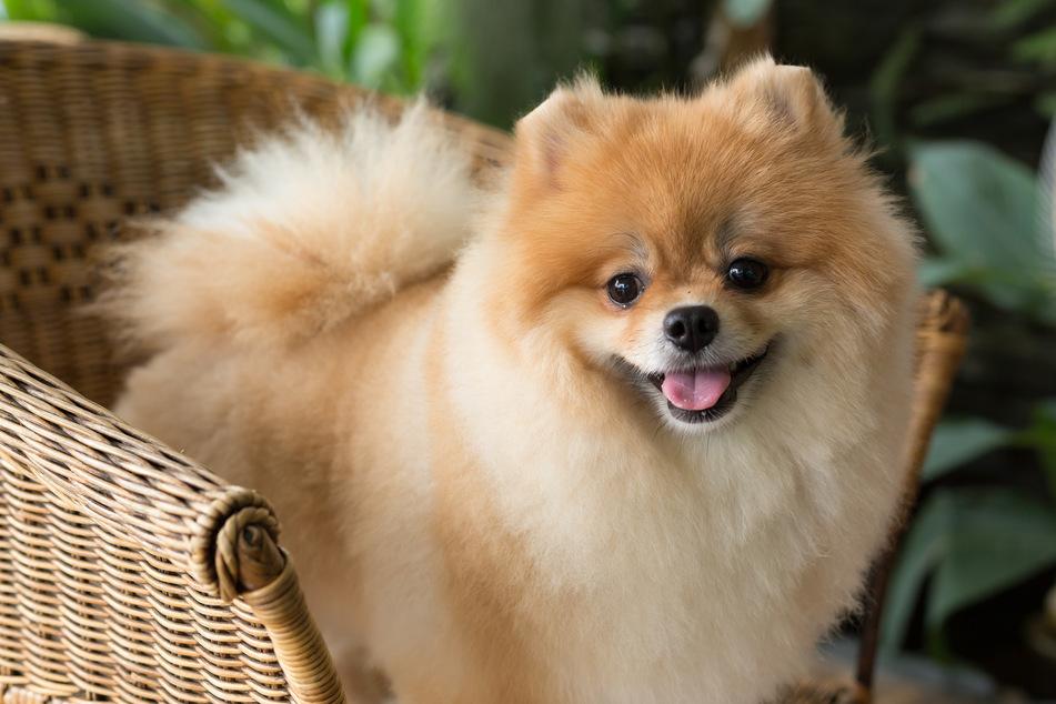 chinesisches tageshoroskop hund
