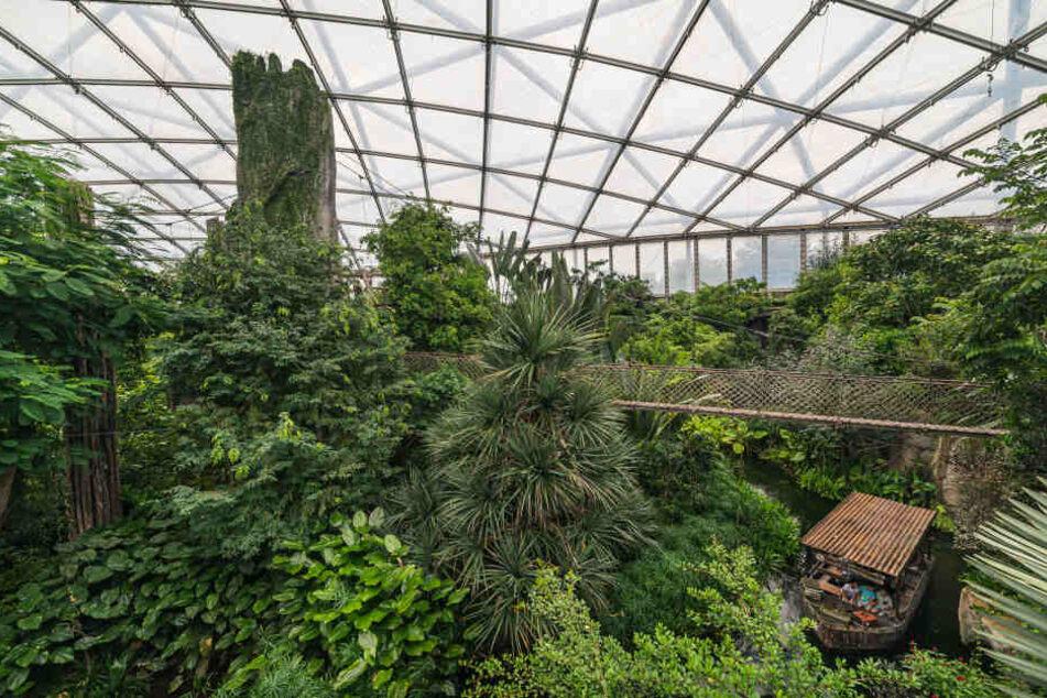 Ein Ausflug in den Leipziger Dschungel wird künftig teurer.